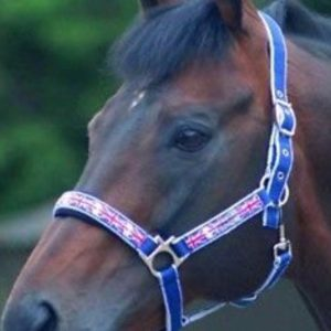 cottage craft union jack headcollar and lead rope
